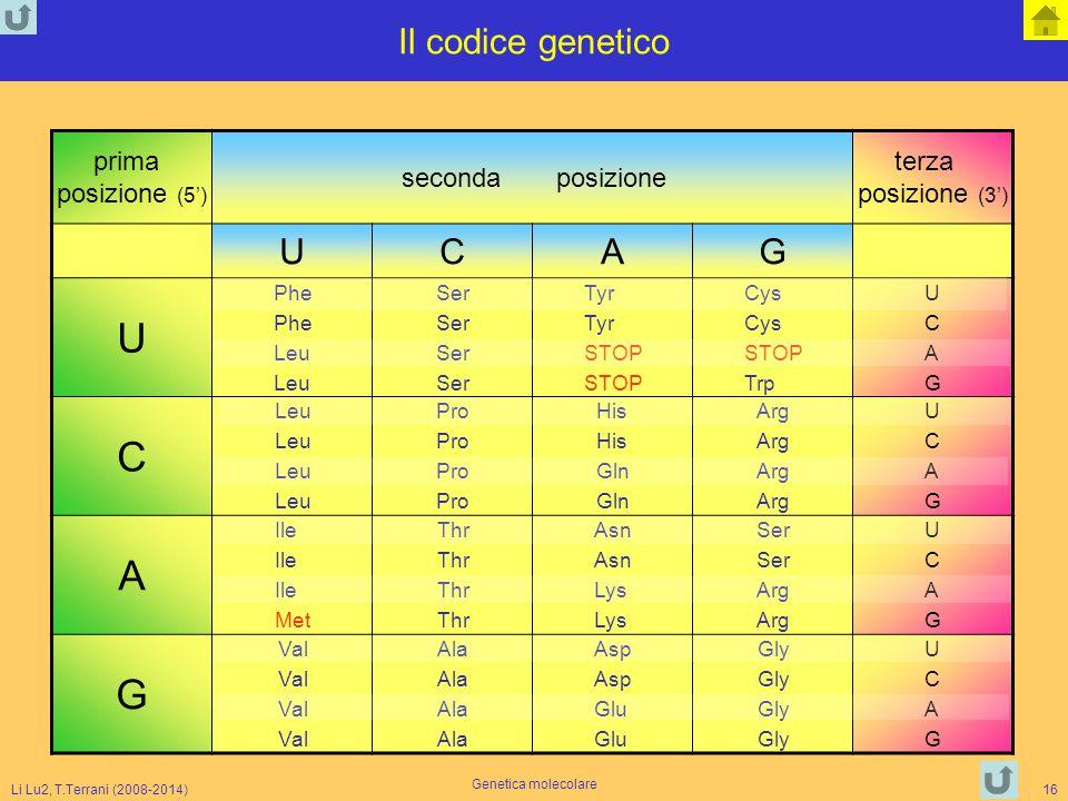 Li Lu2, T.Terrani (2008-2014) Genetica molecolare 16 Il codice genetico prima posizione (5') secondaposizione terza posizione (3') UCAG U Phe Leu Ser