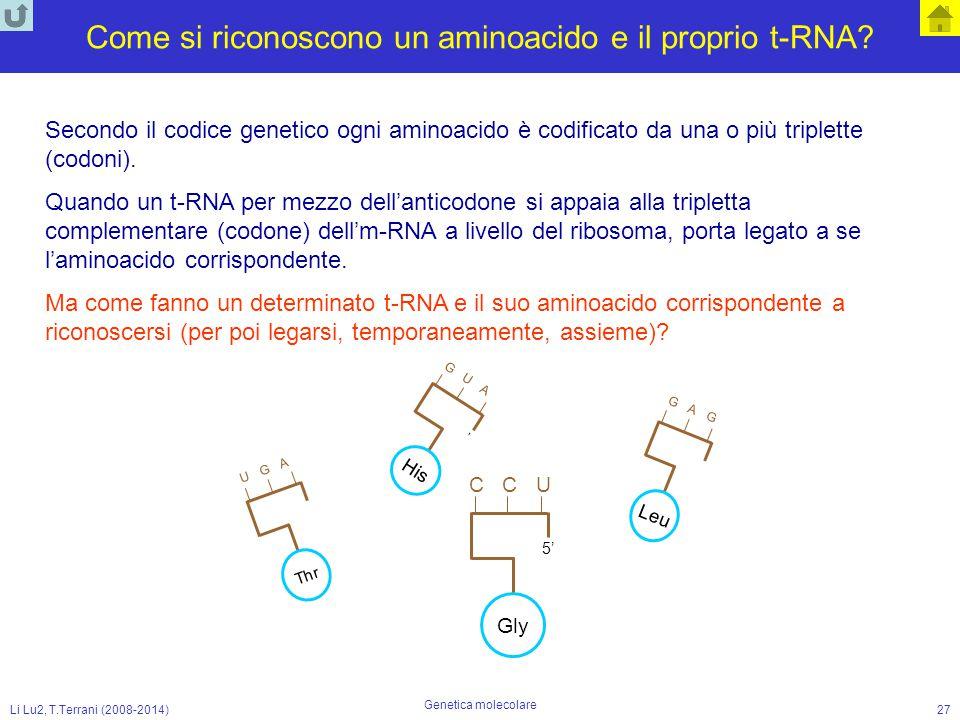 Li Lu2, T.Terrani (2008-2014) Genetica molecolare 27 Come si riconoscono un aminoacido e il proprio t-RNA? Secondo il codice genetico ogni aminoacido