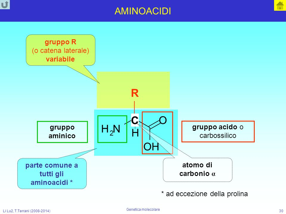Li Lu2, T.Terrani (2008-2014) Genetica molecolare 30 AMINOACIDI NH 2 O OH gruppo R (o catena laterale) variabile parte comune a tutti gli aminoacidi *