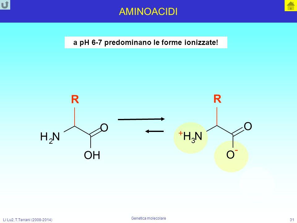 Li Lu2, T.Terrani (2008-2014) Genetica molecolare 31 AMINOACIDI a pH 6-7 predominano le forme ionizzate! N +H+H 3 O O - R NH 2 O OH R