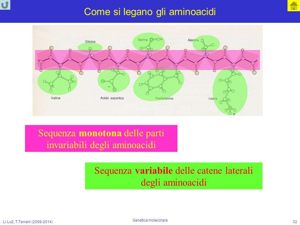 Li Lu2, T.Terrani (2008-2014) Genetica molecolare 32 Come si legano gli aminoacidi Sequenza monotona delle parti invariabili degli aminoacidi Sequenza