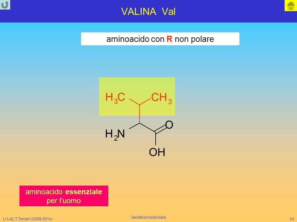 Li Lu2, T.Terrani (2008-2014) Genetica molecolare 34 VALINA Val NH 2 CH 3 O CH 3 OH aminoacido con R non polare aminoacido essenziale per l'uomo