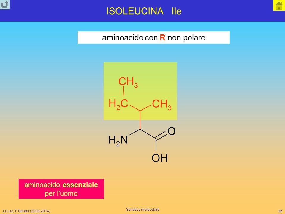 Li Lu2, T.Terrani (2008-2014) Genetica molecolare 36 ISOLEUCINA Ile aminoacido con R non polare NH 2 CH 2 O CH 3 CH 3 OH aminoacido essenziale per l'u