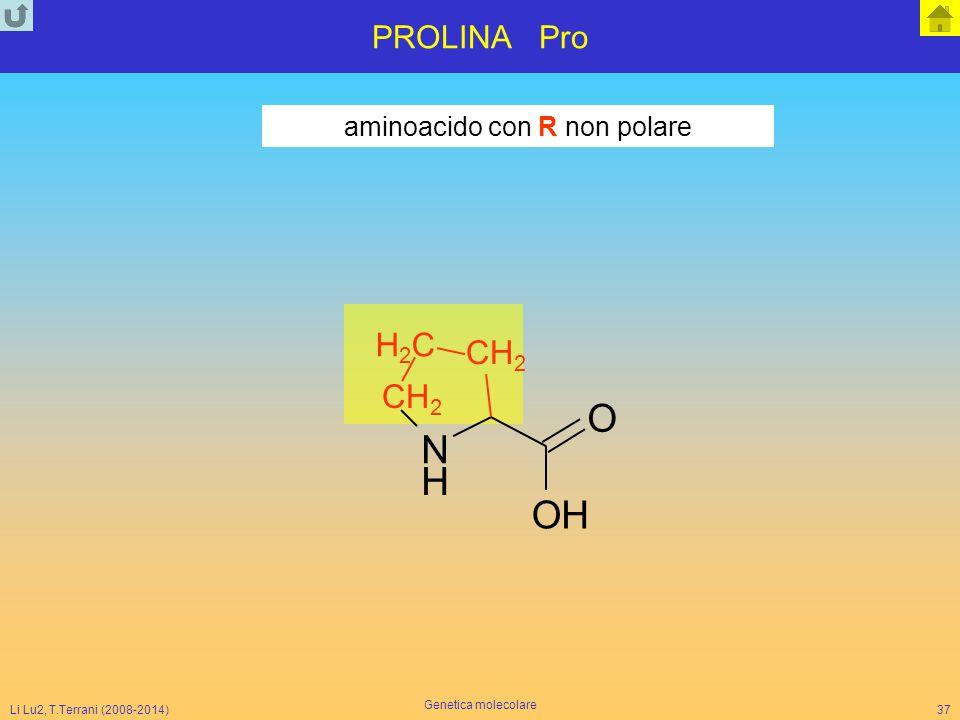 Li Lu2, T.Terrani (2008-2014) Genetica molecolare 37 PROLINA Pro aminoacido con R non polare N H O OH CH 2 H2CH2C