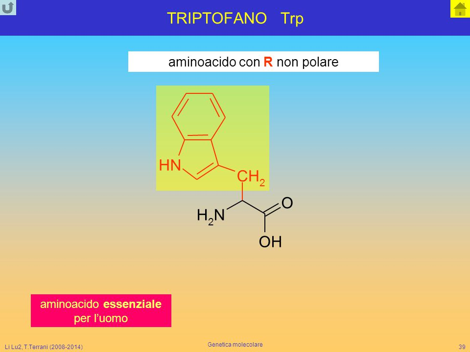 Li Lu2, T.Terrani (2008-2014) Genetica molecolare 39 TRIPTOFANO Trp aminoacido con R non polare NH 2 CH 2 O NH OH aminoacido essenziale per l'uomo
