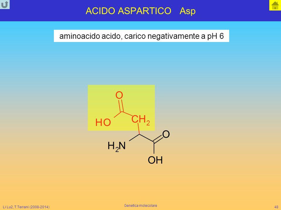 Li Lu2, T.Terrani (2008-2014) Genetica molecolare 48 ACIDO ASPARTICO Asp NH 2 O CH 2 O OH OH aminoacido acido, carico negativamente a pH 6
