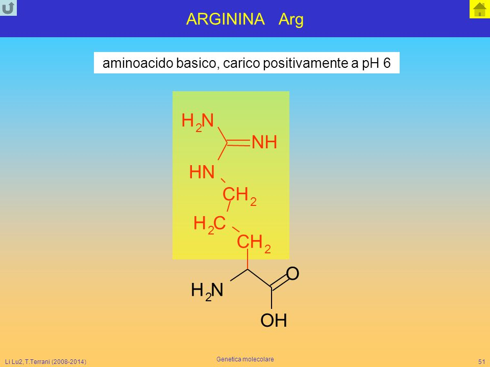 Li Lu2, T.Terrani (2008-2014) Genetica molecolare 51 ARGININA Arg NH 2 O CH 2 CH 2 CH 2 NH NH NH 2 OH aminoacido basico, carico positivamente a pH 6