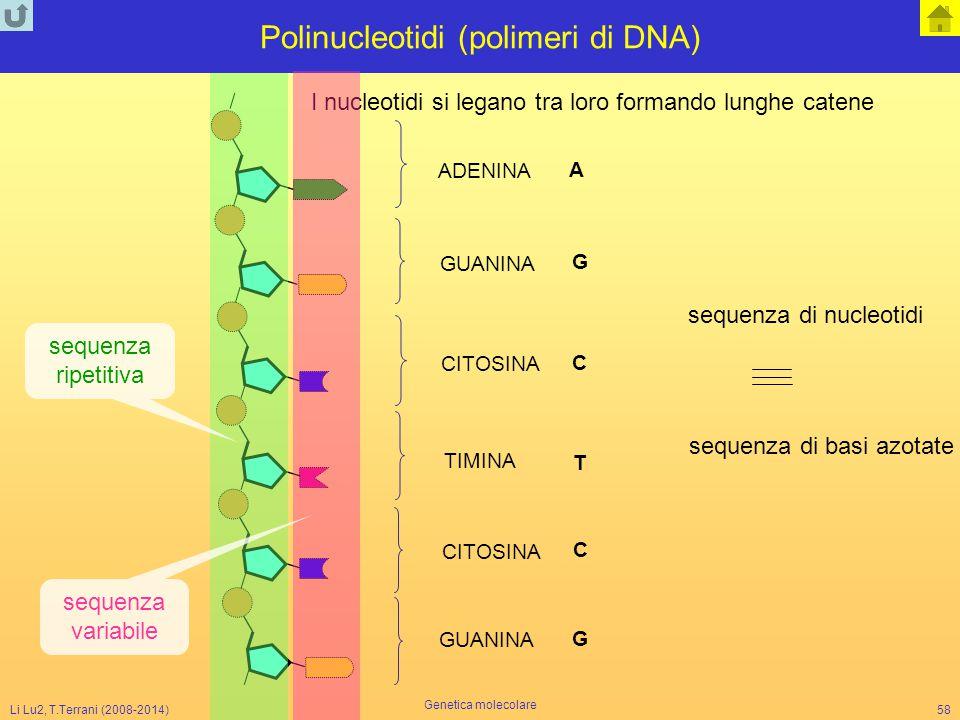 Li Lu2, T.Terrani (2008-2014) Genetica molecolare 58 I nucleotidi si legano tra loro formando lunghe catene ADENINA GUANINA CITOSINA TIMINA A G G C C