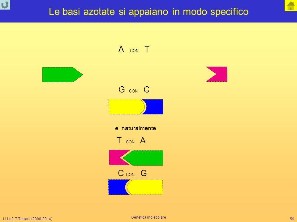 Li Lu2, T.Terrani (2008-2014) Genetica molecolare 59 Le basi azotate si appaiano in modo specifico A CON T G CON C e naturalmente T CON A C CON G
