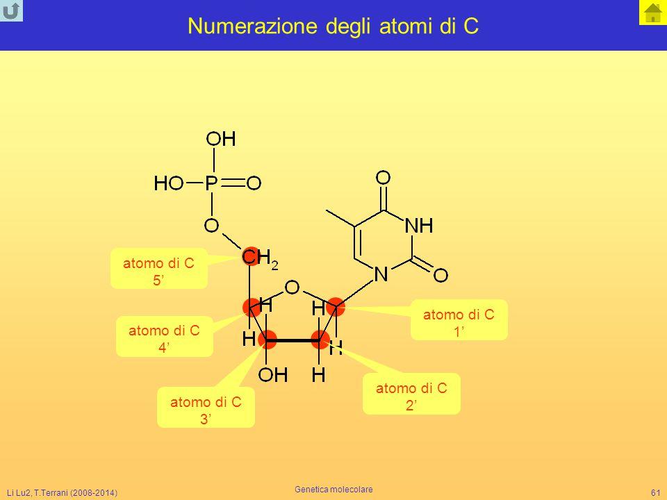 Li Lu2, T.Terrani (2008-2014) Genetica molecolare 61 Numerazione degli atomi di C atomo di C 1' atomo di C 2' atomo di C 3' atomo di C 4' atomo di C 5