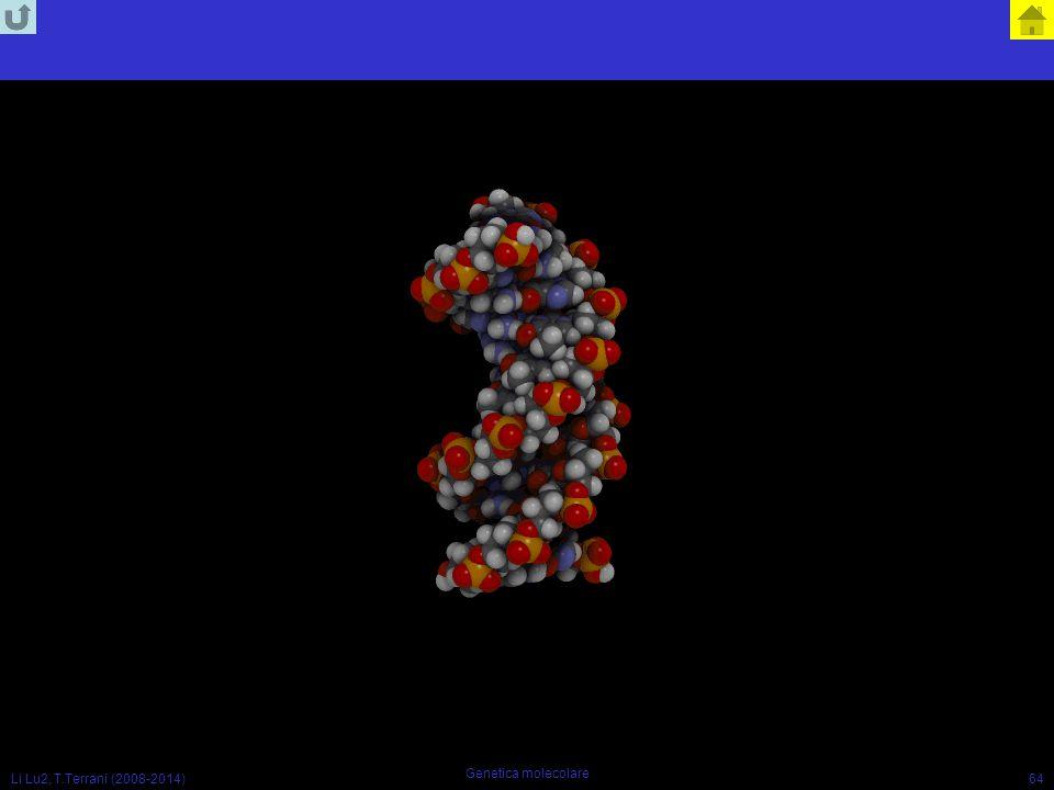 Li Lu2, T.Terrani (2008-2014) Genetica molecolare 64