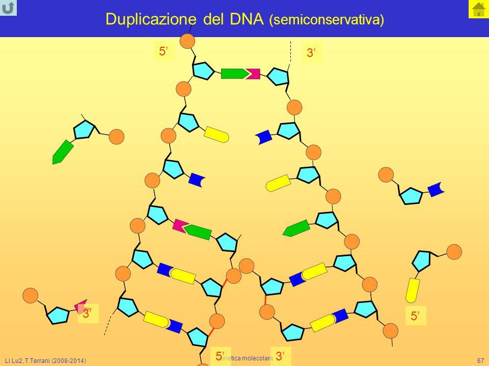 Li Lu2, T.Terrani (2008-2014) Genetica molecolare 67 Duplicazione del DNA (semiconservativa) 5' 3' 5' 3'5'