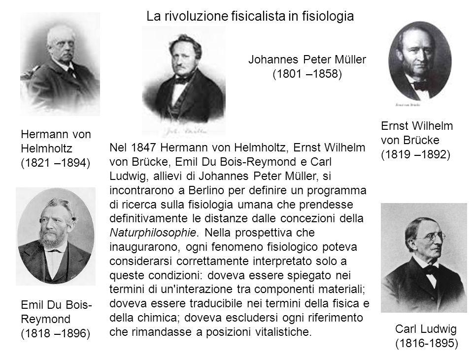 Nel 1847 Hermann von Helmholtz, Ernst Wilhelm von Brücke, Emil Du Bois-Reymond e Carl Ludwig, allievi di Johannes Peter Müller, si incontrarono a Berlino per definire un programma di ricerca sulla fisiologia umana che prendesse definitivamente le distanze dalle concezioni della Naturphilosophie.