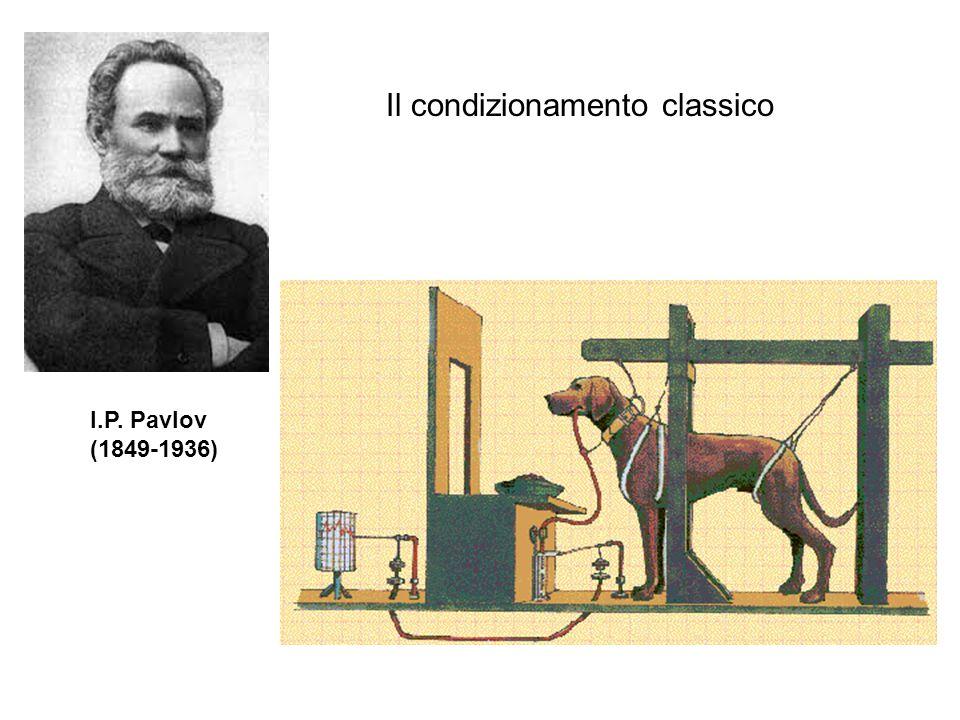 Il condizionamento classico I.P. Pavlov (1849-1936)