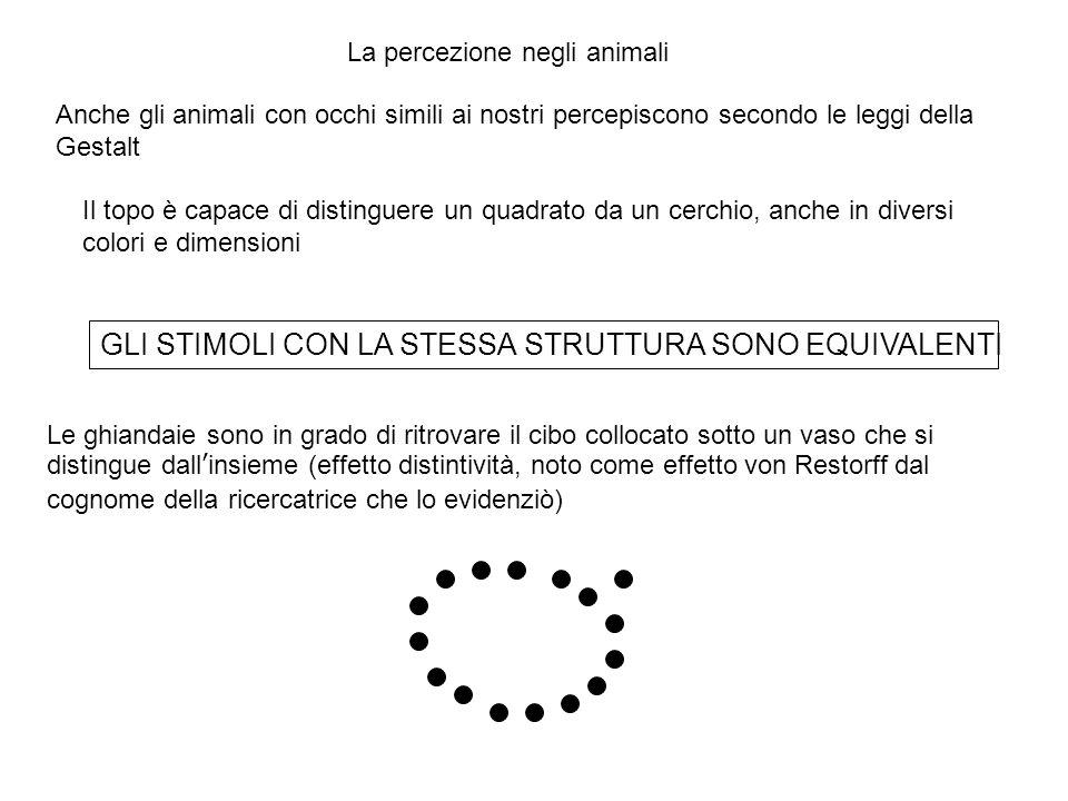 Anche gli animali con occhi simili ai nostri percepiscono secondo le leggi della Gestalt Il topo è capace di distinguere un quadrato da un cerchio, anche in diversi colori e dimensioni Le ghiandaie sono in grado di ritrovare il cibo collocato sotto un vaso che si distingue dall'insieme (effetto distintività, noto come effetto von Restorff dal cognome della ricercatrice che lo evidenziò) GLI STIMOLI CON LA STESSA STRUTTURA SONO EQUIVALENTI La percezione negli animali