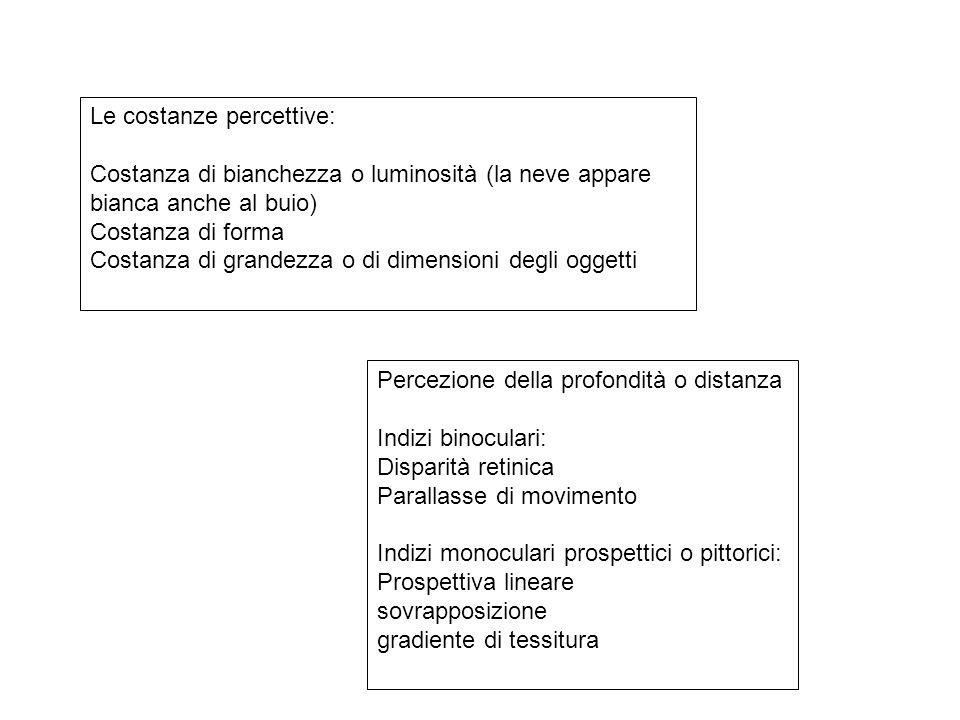 Le costanze percettive: Costanza di bianchezza o luminosità (la neve appare bianca anche al buio) Costanza di forma Costanza di grandezza o di dimensioni degli oggetti Percezione della profondità o distanza Indizi binoculari: Disparità retinica Parallasse di movimento Indizi monoculari prospettici o pittorici: Prospettiva lineare sovrapposizione gradiente di tessitura