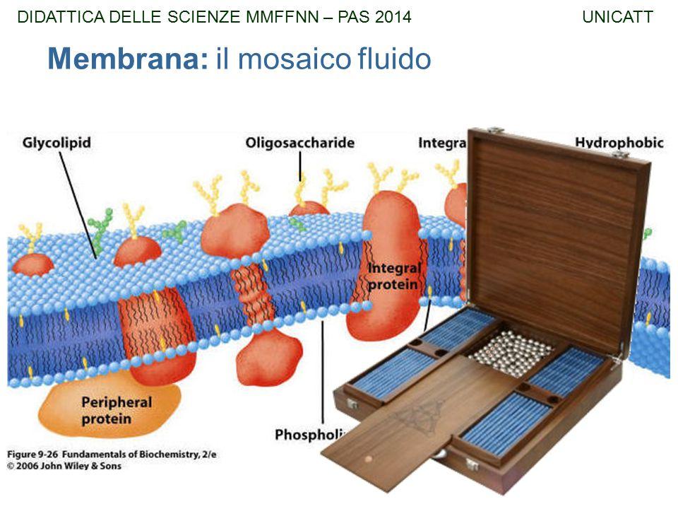 Membrana: il mosaico fluido DIDATTICA DELLE SCIENZE MMFFNN – PAS 2014 UNICATT