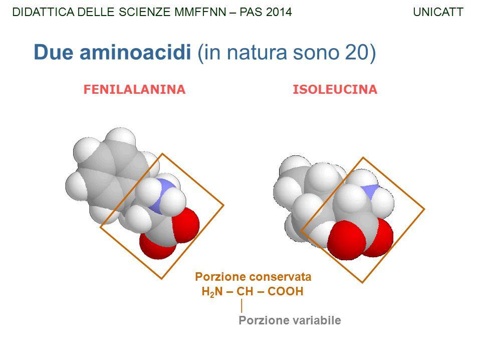 Due aminoacidi (in natura sono 20) FENILALANINA ISOLEUCINA Porzione conservata H 2 N – CH – COOH │ Porzione variabile DIDATTICA DELLE SCIENZE MMFFNN –