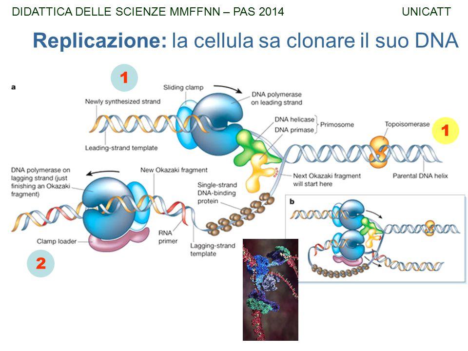 1 2 1 Replicazione: la cellula sa clonare il suo DNA