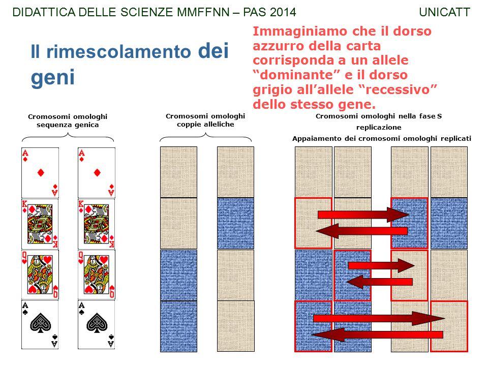 """replicazione Immaginiamo che il dorso azzurro della carta corrisponda a un allele """"dominante"""" e il dorso grigio all'allele """"recessivo"""" dello stesso ge"""
