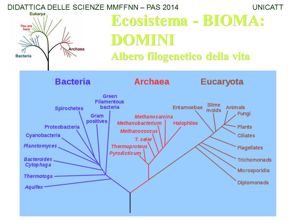 Ecosistema - BIOMA: DOMINI Albero filogenetico della vita Ecosistema - BIOMA: DOMINI Albero filogenetico della vita DIDATTICA DELLE SCIENZE MMFFNN – P