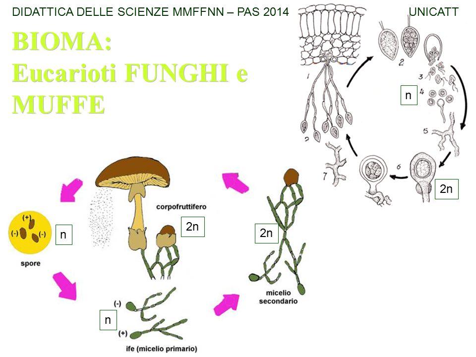 2n n n n BIOMA: Eucarioti FUNGHI e MUFFE BIOMA: Eucarioti FUNGHI e MUFFE DIDATTICA DELLE SCIENZE MMFFNN – PAS 2014 UNICATT