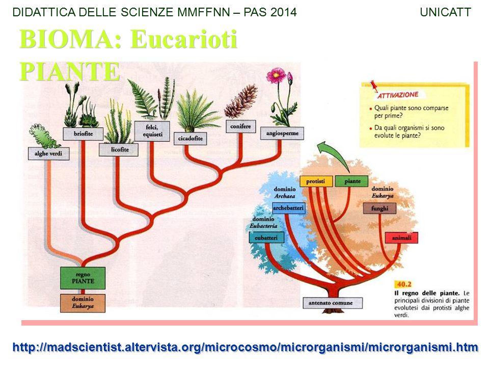 http://madscientist.altervista.org/microcosmo/microrganismi/microrganismi.htm BIOMA: Eucarioti PIANTE DIDATTICA DELLE SCIENZE MMFFNN – PAS 2014 UNICAT