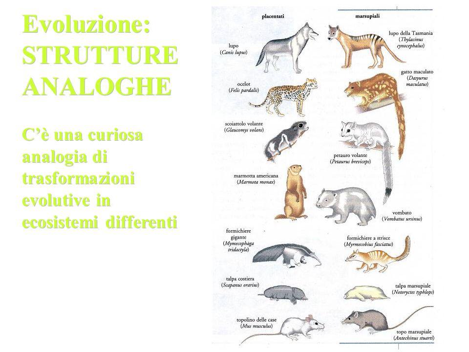 Evoluzione: STRUTTURE ANALOGHE C'è una curiosa analogia di trasformazioni evolutive in ecosistemi differenti Evoluzione: STRUTTURE ANALOGHE C'è una cu