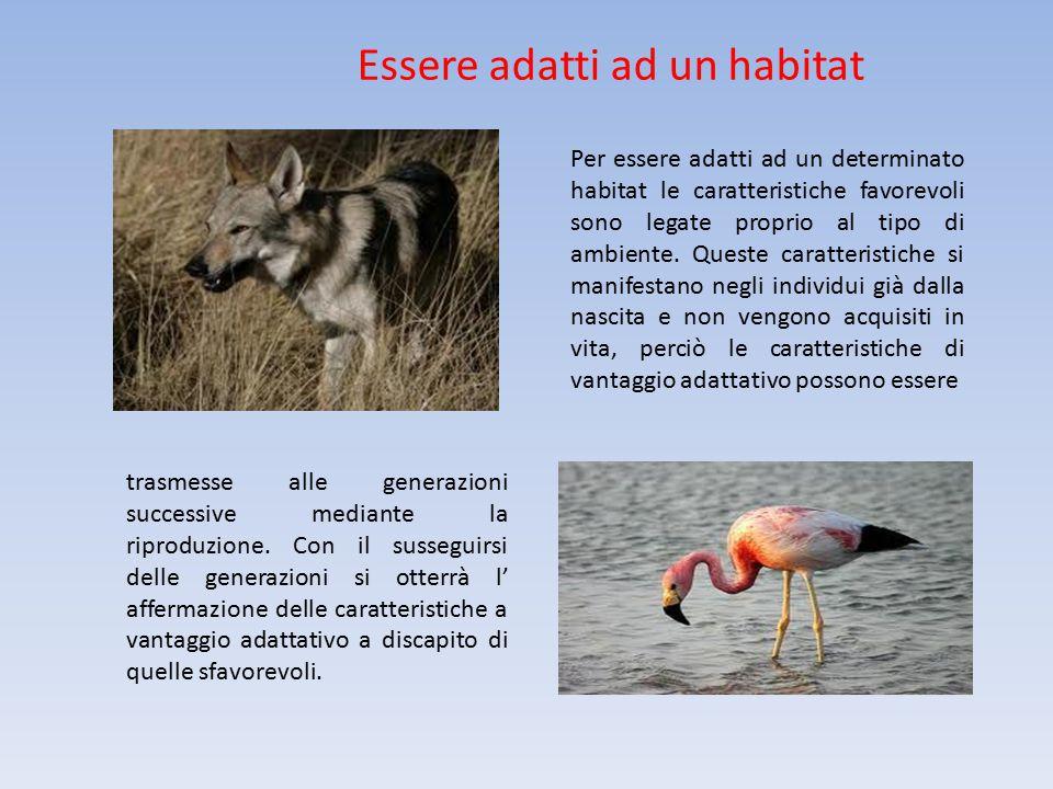 Essere adatti ad un habitat Per essere adatti ad un determinato habitat le caratteristiche favorevoli sono legate proprio al tipo di ambiente. Queste