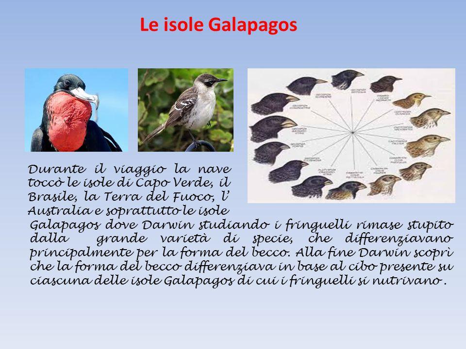 Le isole Galapagos Durante il viaggio la nave toccò le isole di Capo Verde, il Brasile, la Terra del Fuoco, l' Australia e soprattutto le isole Galapa