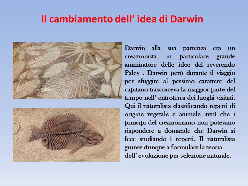 Al ritorno in Inghilterra Già solo due anni dopo il suo ritorno in Inghilterra, e quindi nel 1838, Darwin era sicuro che la vita si era evoluta per cause naturali.