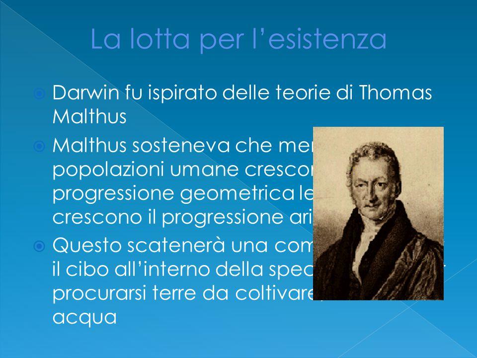  Darwin fu ispirato delle teorie di Thomas Malthus  Malthus sosteneva che mentre le popolazioni umane crescono in progressione geometrica le risorse crescono il progressione aritmetica  Questo scatenerà una competizione per il cibo all'interno della specie umana per procurarsi terre da coltivare, cibo e acqua