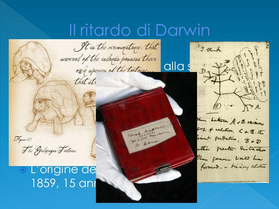  Darwin iniziò a lavorare alla sua teoria nel 1836 e per questo scrisse diversi taccuini e due bozze l'ultima delle quali nel 1844  Diete disposizione che quest'ultima fosse pubblicata in caso di una sua prematura scomparsa  L'origine delle specie vide la luce solo ne 1859, 15 anni dopo