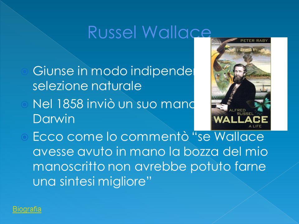  Giunse in modo indipendente alla selezione naturale  Nel 1858 inviò un suo manoscritto a Darwin  Ecco come lo commentò se Wallace avesse avuto in mano la bozza del mio manoscritto non avrebbe potuto farne una sintesi migliore Biografia