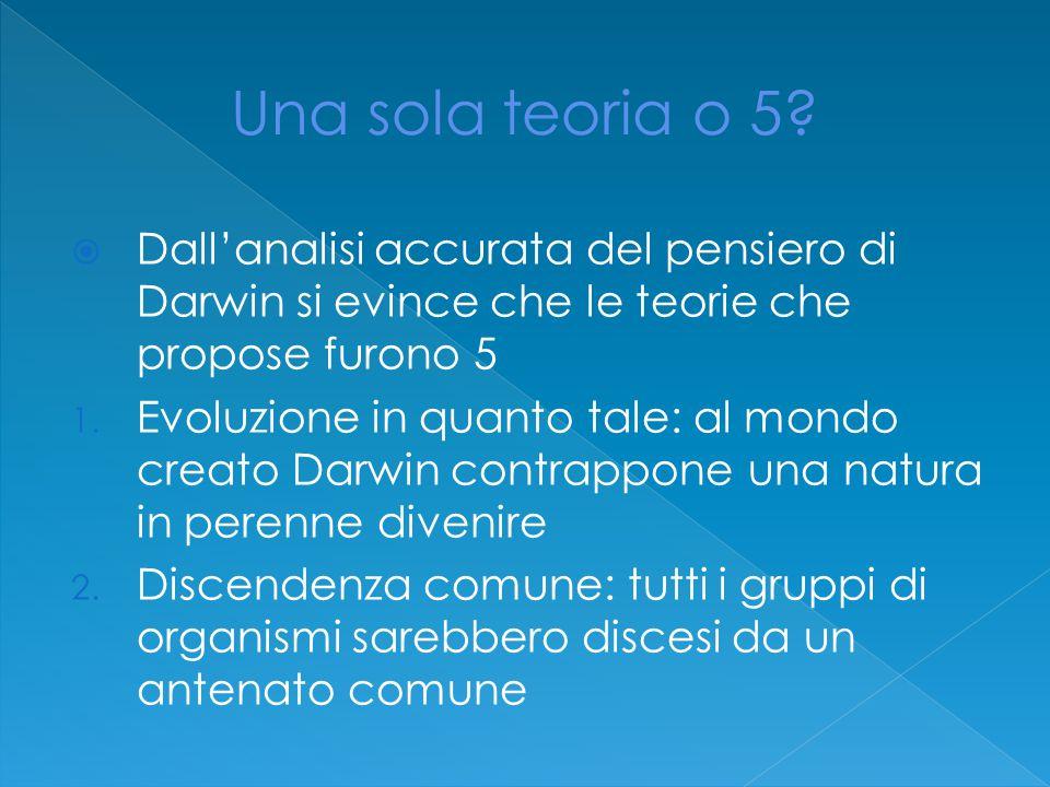  Dall'analisi accurata del pensiero di Darwin si evince che le teorie che propose furono 5 1.