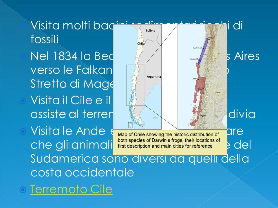  Visita molti bacini sedimentari ricchi di fossili  Nel 1834 la Beagle parte da Buenos Aires verso le Falkand per poi superare lo Stretto di Magellano  Visita il Cile e il 20 febbraio del 1835 assiste al terremoti che distrusse Valdivia  Visita le Ande e ha modo di costatare che gli animali della costa orientale del Sudamerica sono diversi da quelli della costa occidentale  Terremoto Cile Terremoto Cile