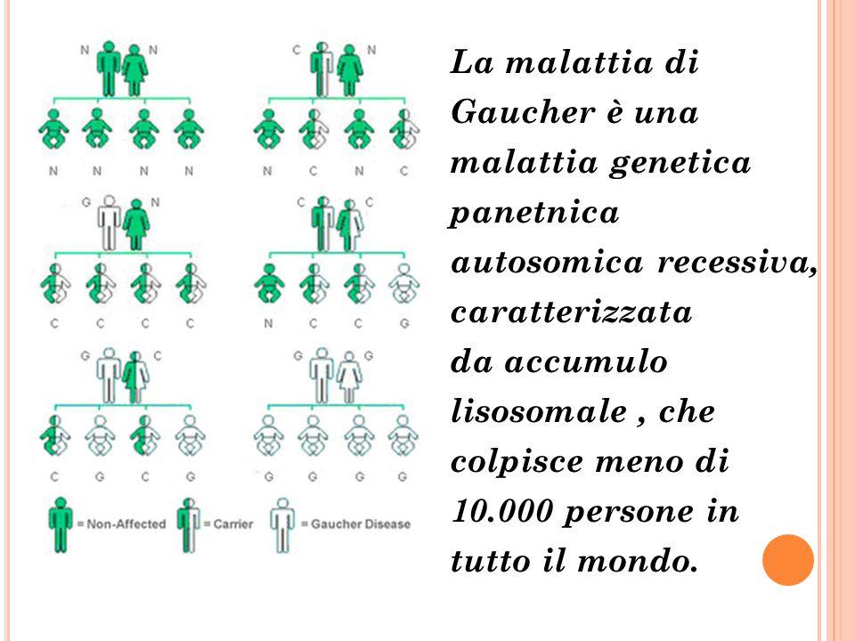 La malattia di Gaucher è una malattia genetica panetnica autosomica recessiva, caratterizzata da accumulo lisosomale, che colpisce meno di 10.000 pers