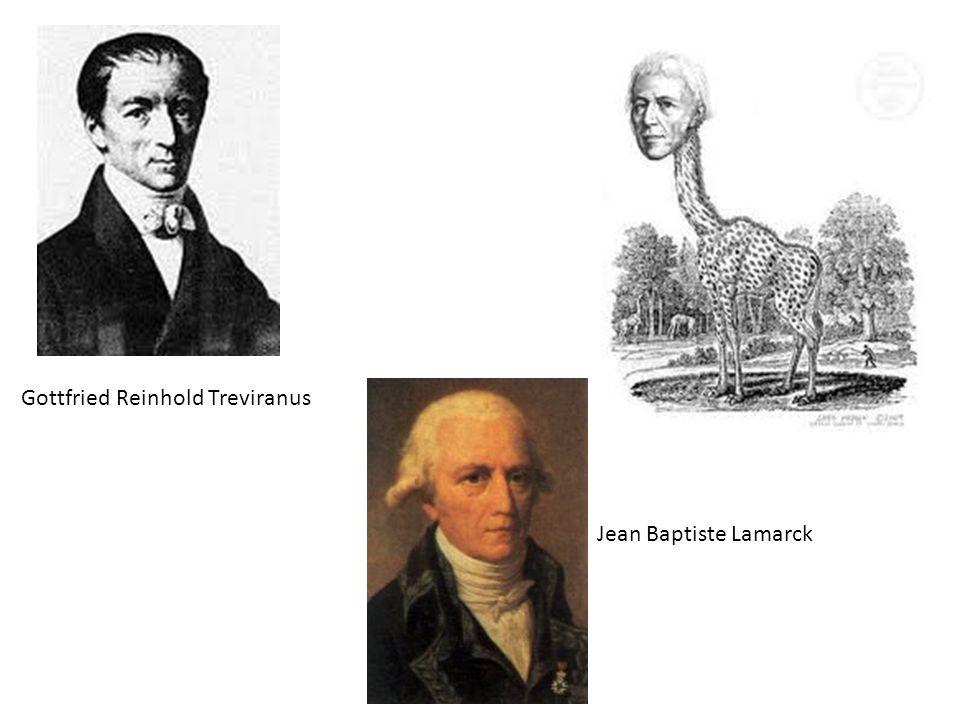 Gottfried Reinhold Treviranus Jean Baptiste Lamarck