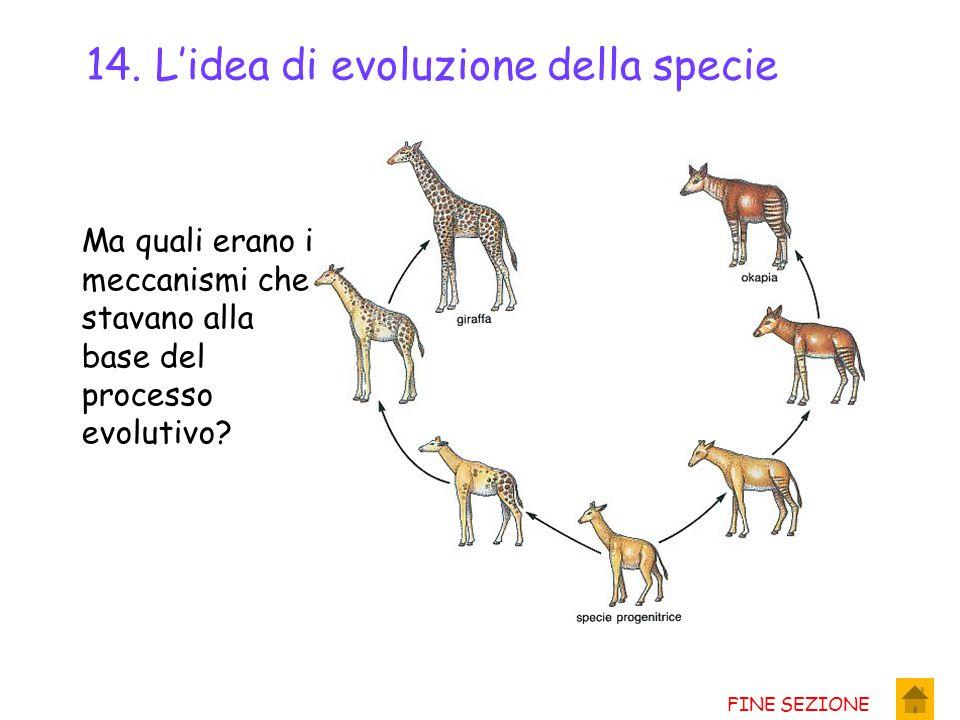 12. L'idea di evoluzione della specie Gli interrogativi che suscitavano lo studio dei fossili portò gli scienziati ad una nuova idea: Non poteva darsi