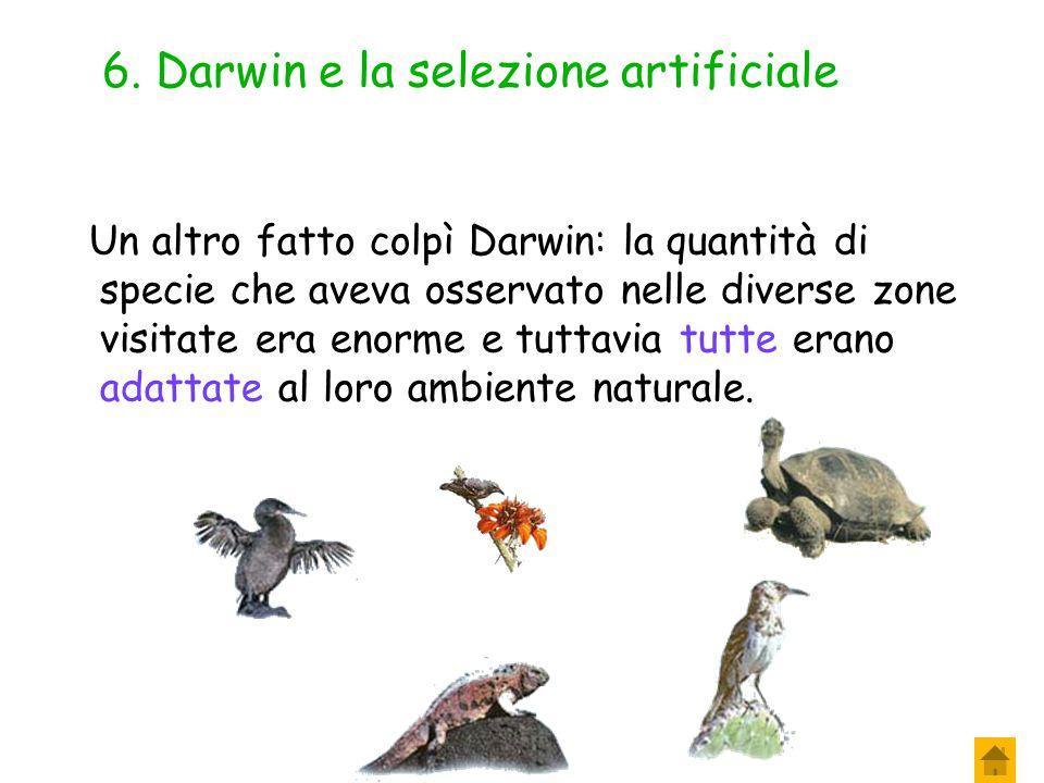 5. Darwin e la selezione artificiale