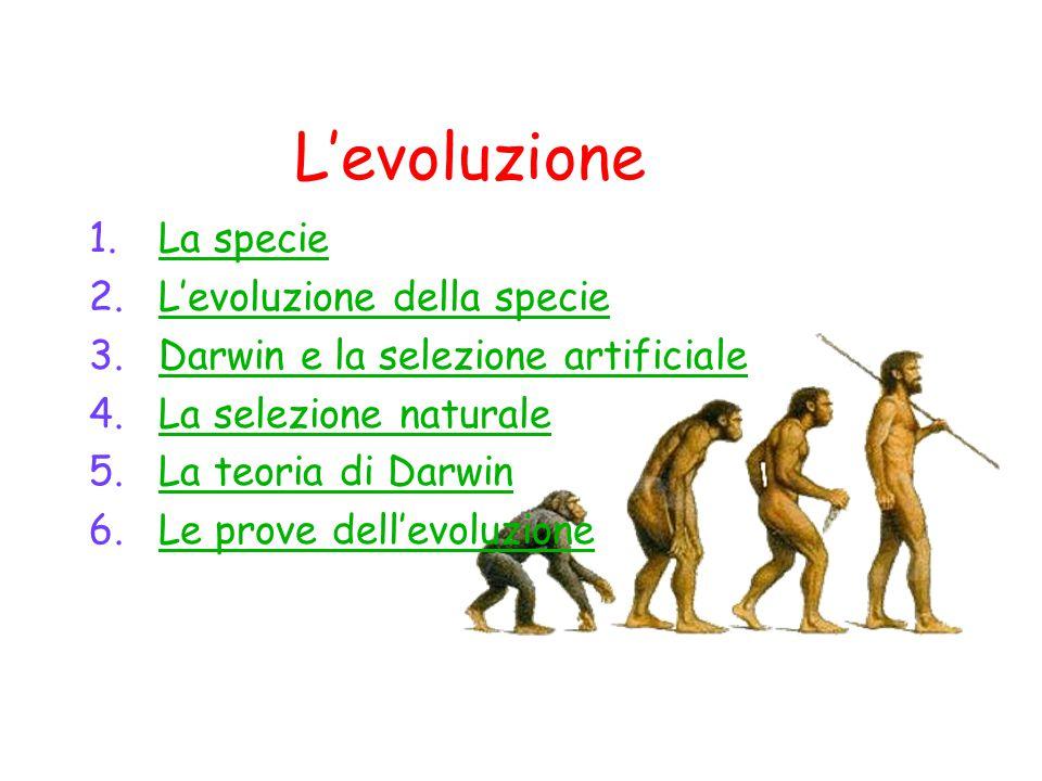 L'evoluzioneL'evoluzione