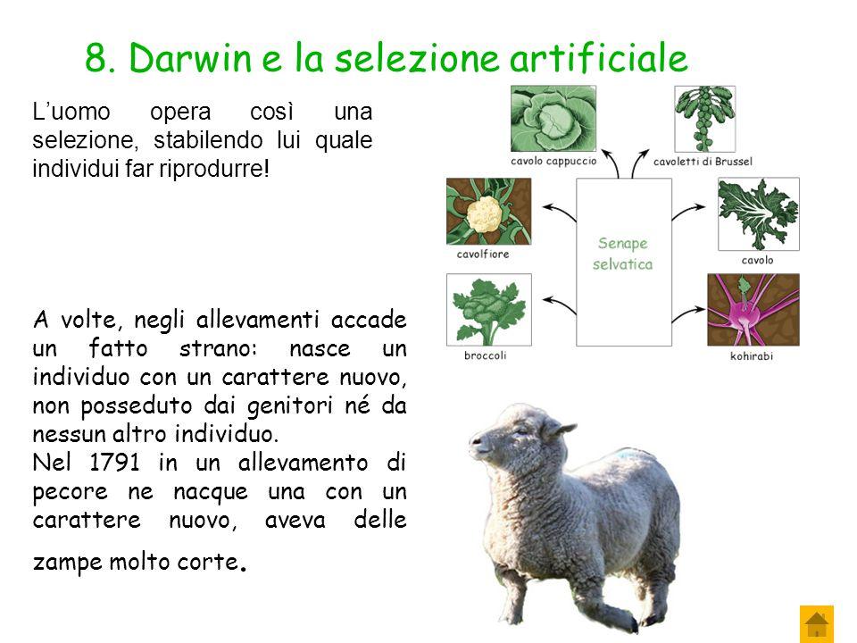 7. Darwin e la selezione artificiale La selezione artificiale