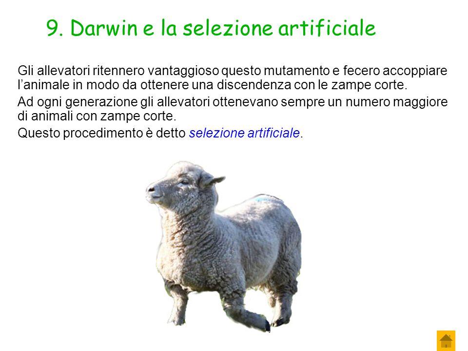 8. Darwin e la selezione artificiale L'uomo opera così una selezione, stabilendo lui quale individui far riprodurre! A volte, negli allevamenti accade