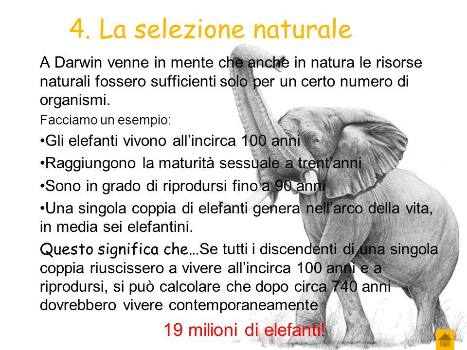 3. La selezione naturale In quel tempo Darwin ebbe l'occasione di leggere un libro di Malthus il quale sosteneva che la popolazione umana stesse aumen