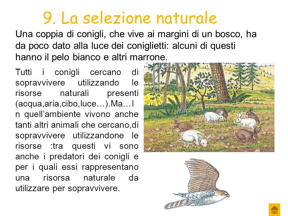 8. La selezione naturale Ma quali sono gli organismi che sopravvivono e quali quelli che muoiono prima che possano riprodursi? Per Darwin sopravvive i