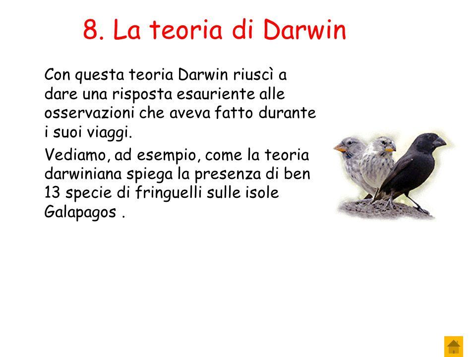 6. La teoria di Darwin 5. La trasmissione dei caratteri Gli individui selezionati dall'ambiente sono quelli che raggiungono la maturità sessuale e che