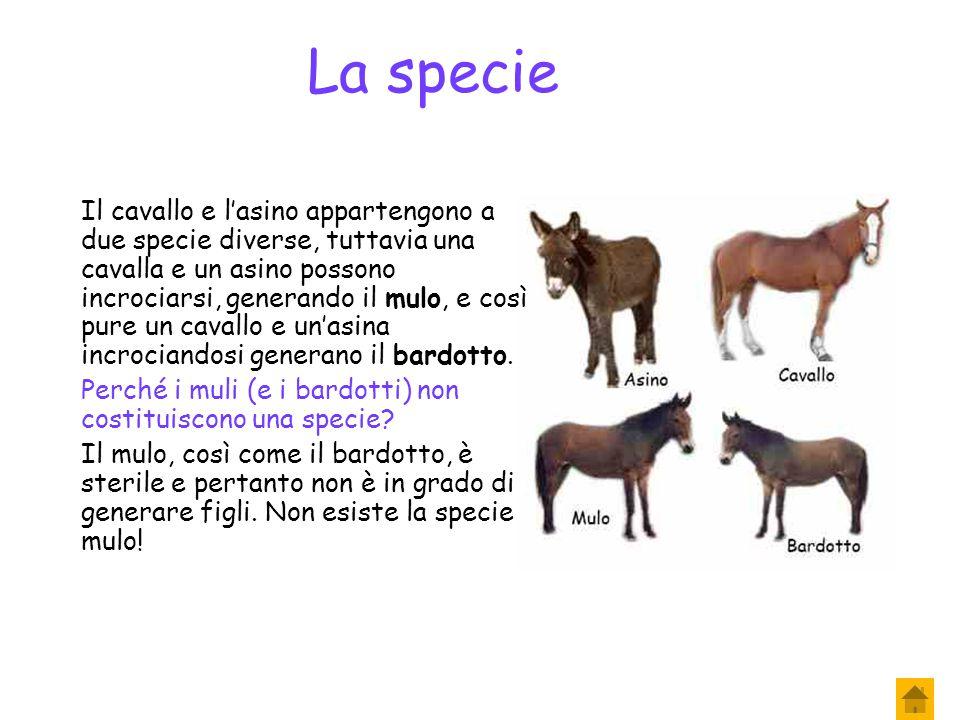 La specie Una specie è l'insieme degli organismi, maschi e femmine, aventi caratteristiche strutturali identiche (ossia si assomigliano molto tra loro