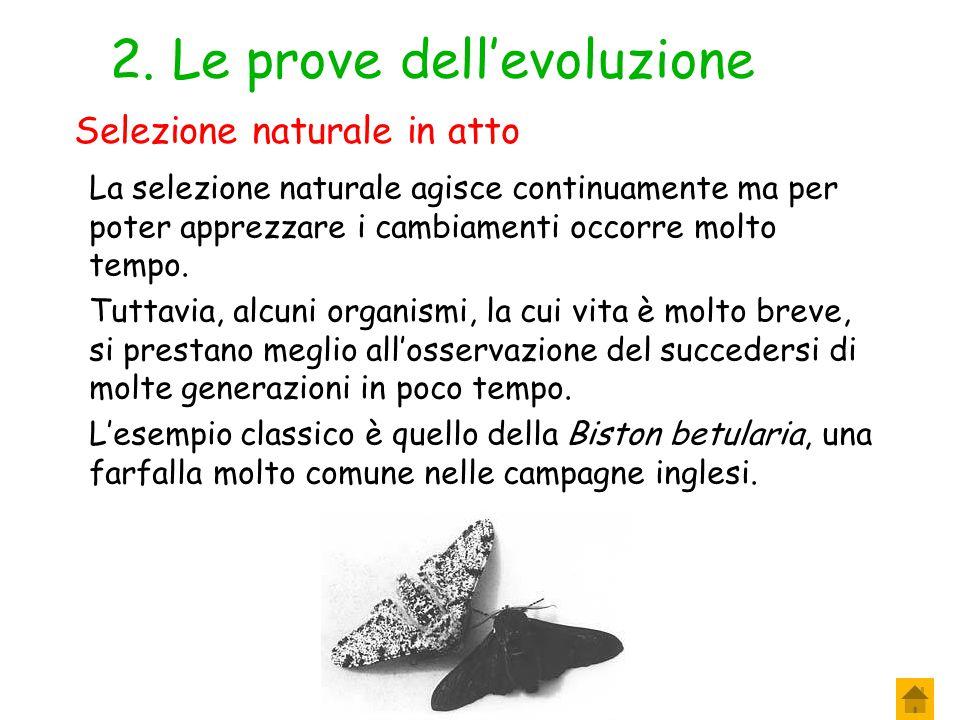 1. Le prove dell'evoluzione Gli scienziati hanno interpretato alcune osservazioni e alcuni fenomeni come prove della selezione naturale. Secondo alcun