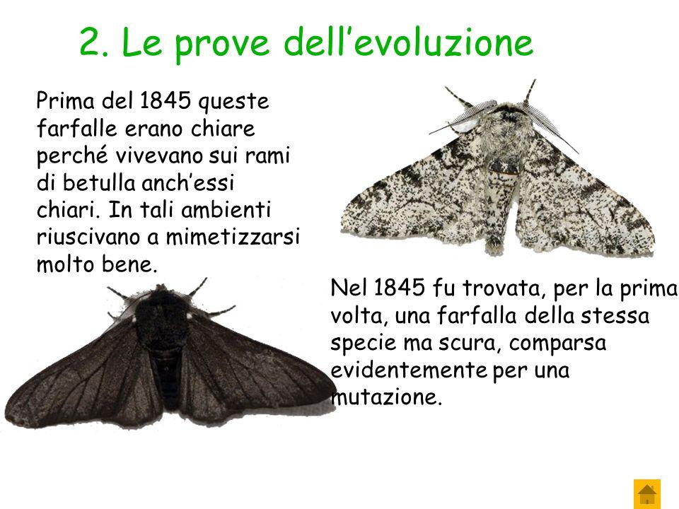 2. Le prove dell'evoluzione Selezione naturale in atto La selezione naturale agisce continuamente ma per poter apprezzare i cambiamenti occorre molto