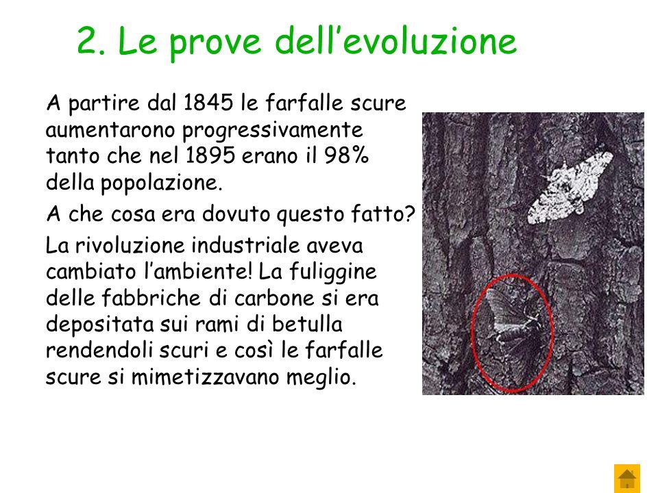 2. Le prove dell'evoluzione Prima del 1845 queste farfalle erano chiare perché vivevano sui rami di betulla anch'essi chiari. In tali ambienti riusciv